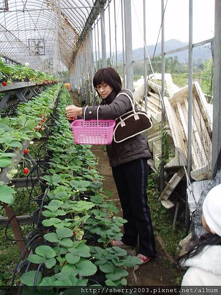 2008-02-03_新竹關西_亞森休閒農場_02