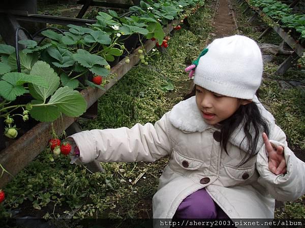 2008-02-03_新竹關西_亞森休閒農場_03