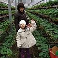 2008-02-03_新竹關西_亞森休閒農場_05