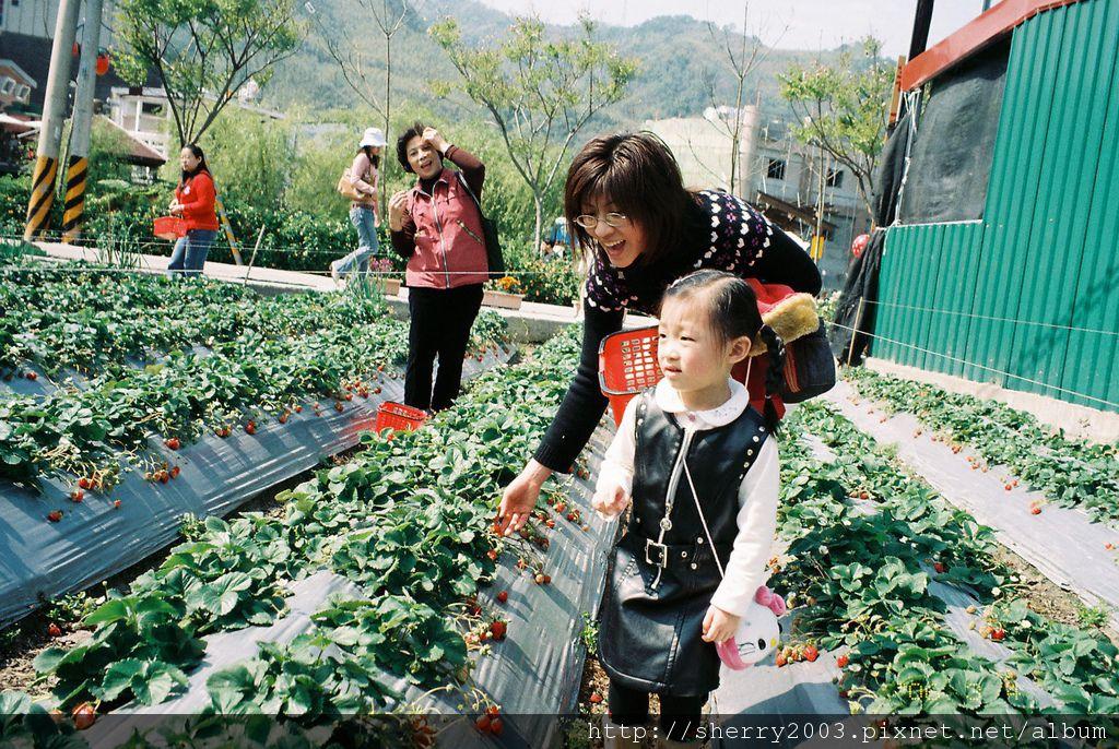 2006-03-04_苗栗_大湖_01