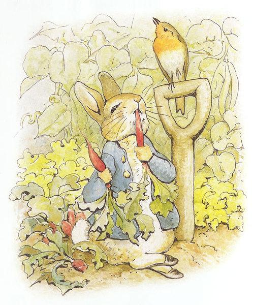 彼得跑到麥先生的菜園吃胡蘿蔔