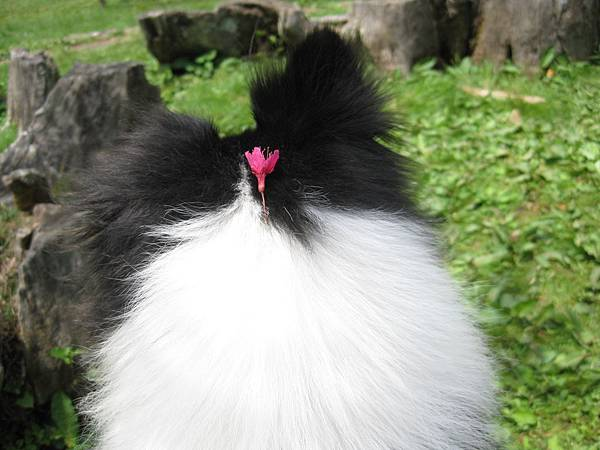 頭上放朵花XD