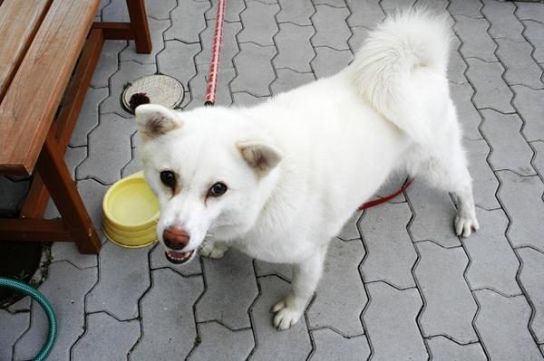 這是民宿主人家養的狗~好像叫太郎吧:p