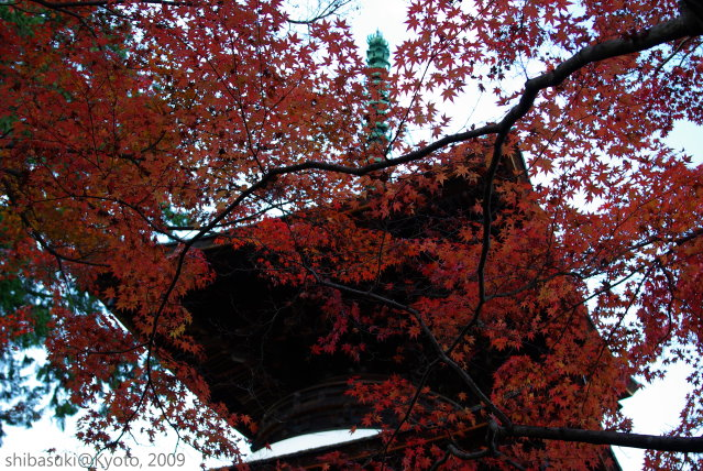 20091125_Kyoto-351_常寂光寺.JPG