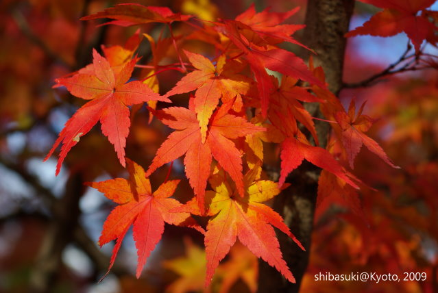 20091125_Kyoto-285_天龍寺.JPG