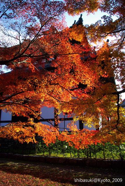 20091127_Kyoto-285_東福寺.JPG