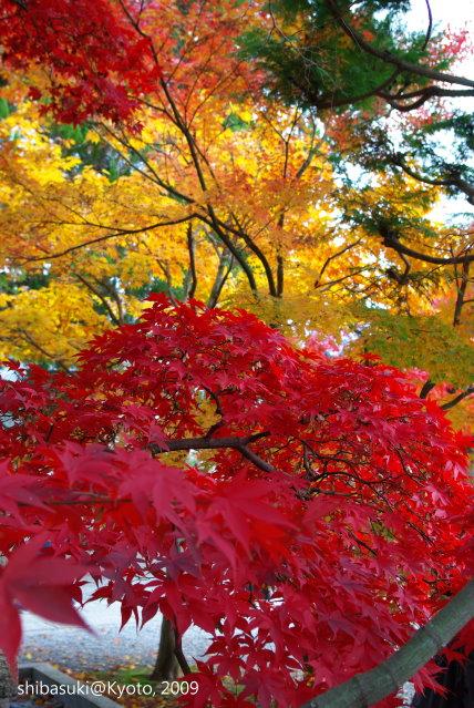 20091128_Kyoto-259_光明寺.JPG