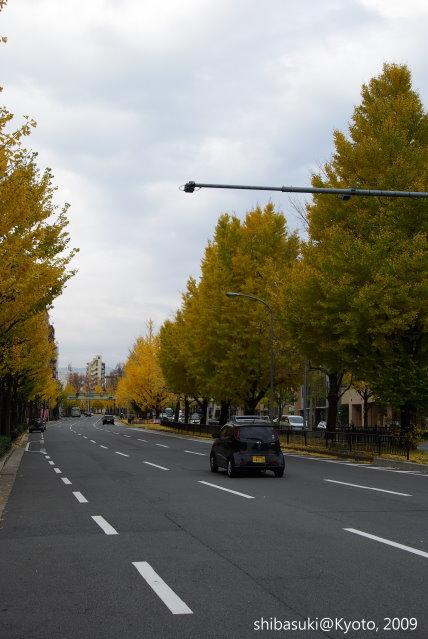 20091129_Kyoto-54_晴明神社前.JPG