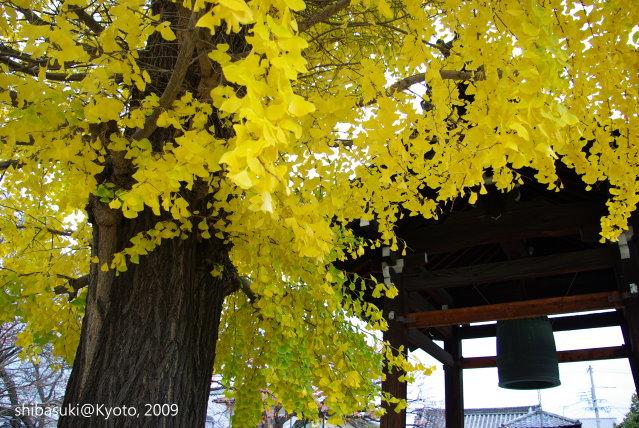20091129_Kyoto-38_本隆寺(鳥岩樓對面).JPG