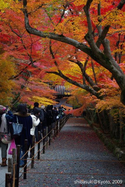 20091128_Kyoto-302_光明寺.JPG
