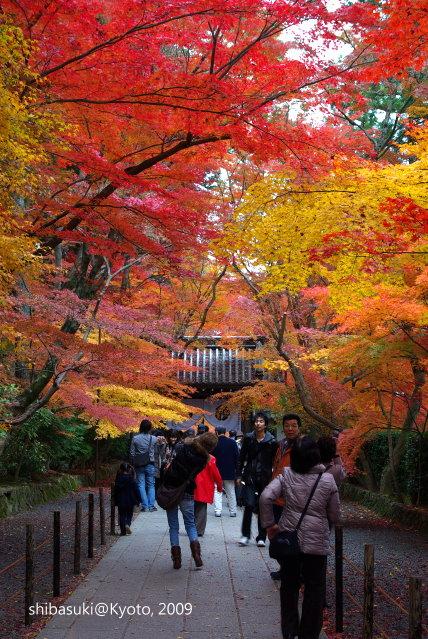 20091128_Kyoto-332_光明寺s.jpg