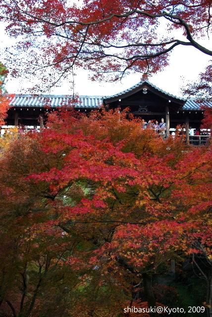 20091127_Kyoto-219_東福寺p.JPG