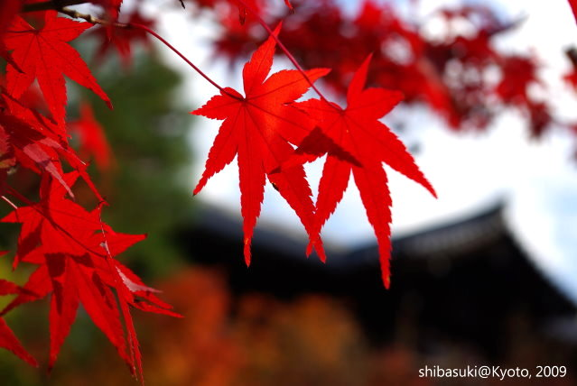 20091127_Kyoto-197_東福寺p.JPG