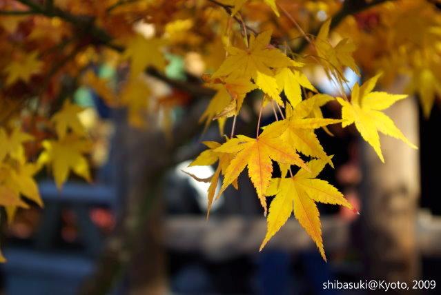 20091127_Kyoto-267_東福寺p.JPG