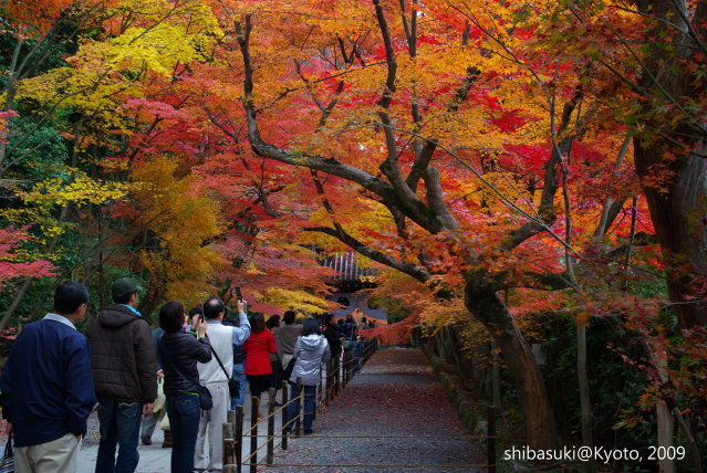 20091128_Kyoto-312_光明寺.jpg