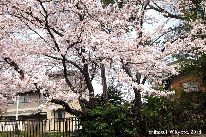 20110411_Kyoto-155_搭十石舟遊岡崎疏水道_1.JPG