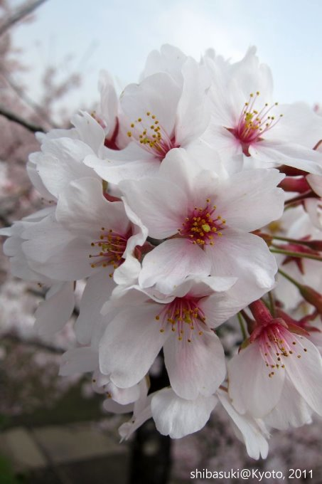 20110411_Kyoto-25_南禪寺橋_1.JPG