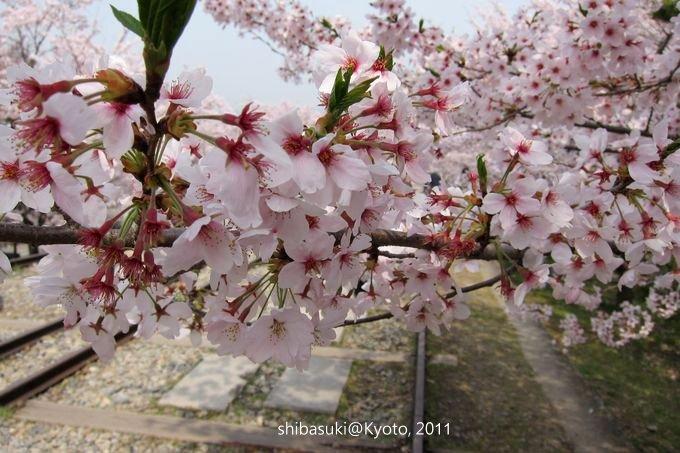 20110411_Kyoto-68_就上鐵道_1.JPG