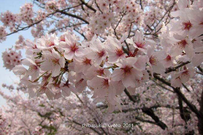 20110411_Kyoto-69_就上鐵道_1.JPG