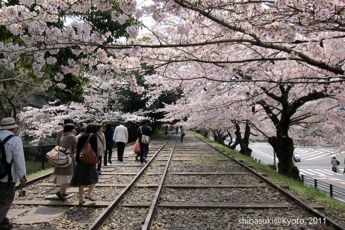 20110411_Kyoto-110_就上鐵道_1.JPG