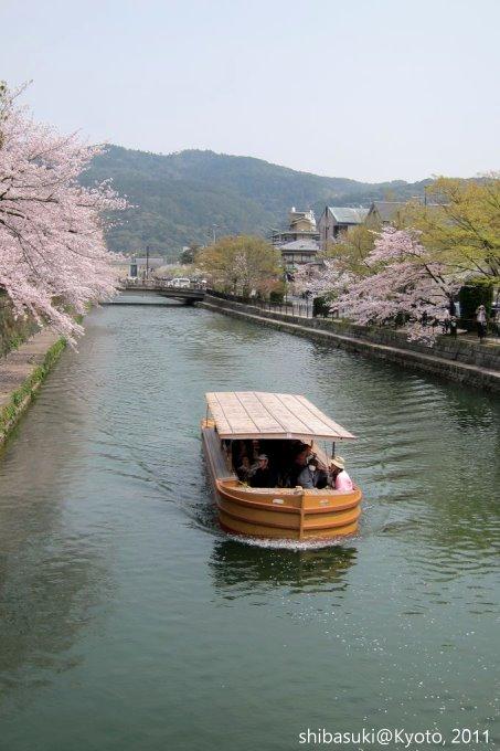 20110411_Kyoto-236_岡崎疏水道_1.JPG