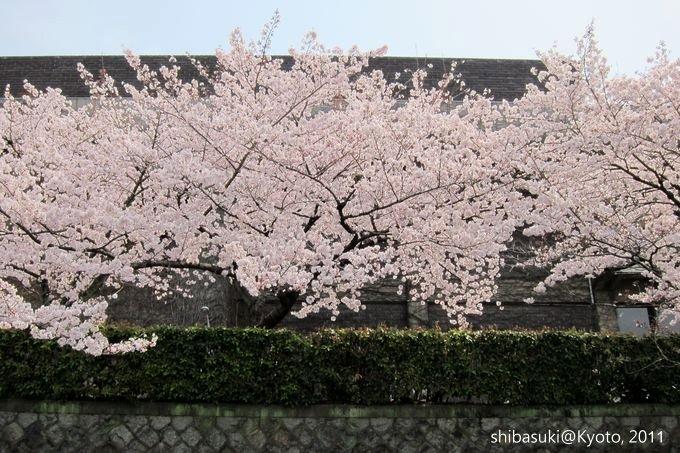 20110411_Kyoto-159_搭十石舟遊岡崎疏水道_1.JPG