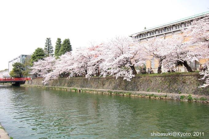 20110411_Kyoto-180_岡崎疏水道_1.JPG