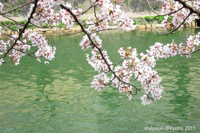 20110411_Kyoto-185_岡崎疏水道_1.JPG