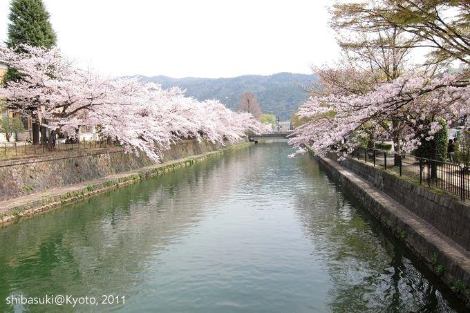 20110411_Kyoto-192_岡崎疏水道_1.JPG