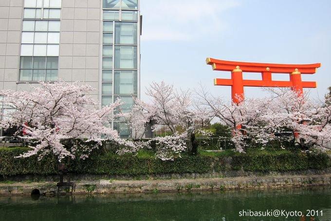 20110411_Kyoto-197_岡崎疏水道_1.JPG