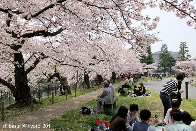 20110411_Kyoto-222_京都市美術館公園_1.JPG