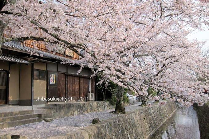 20110411_Kyoto-283_哲學之道_1.JPG