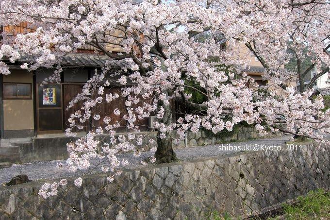 20110411_Kyoto-287_哲學之道_1.JPG