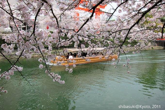 20110411_Kyoto-242_岡崎疏水道_1.JPG