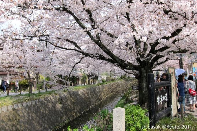 20110411_Kyoto-252_哲學之道_1.JPG