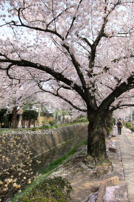 20110411_Kyoto-256_哲學之道_1.JPG