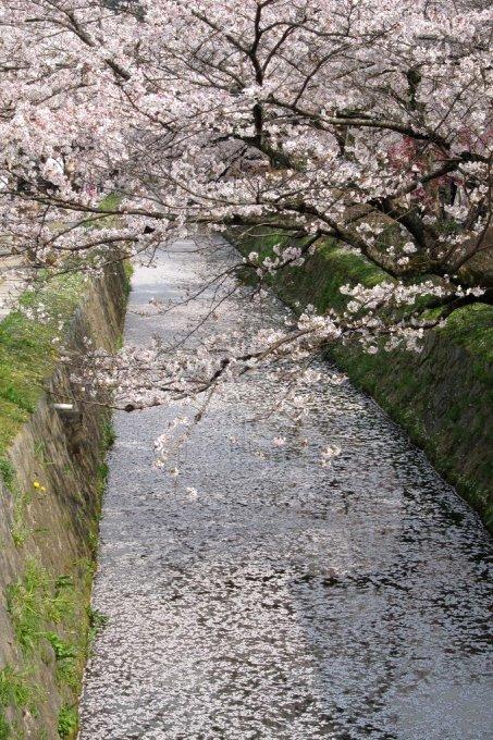 20110411_Kyoto-261_哲學之道_1.JPG