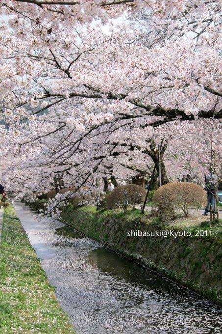20110411_Kyoto-263_哲學之道_1.JPG