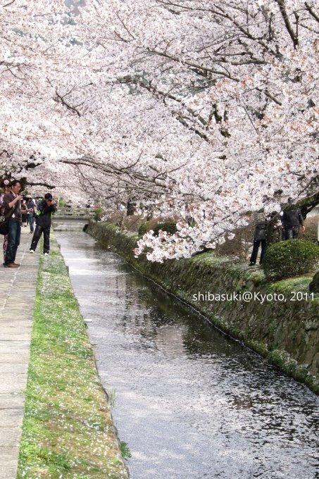 20110411_Kyoto-267_哲學之道_1.JPG