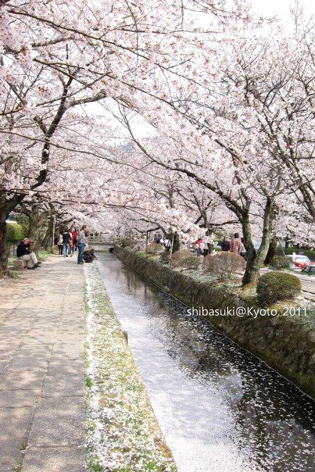 20110411_Kyoto-269_哲學之道_1.JPG