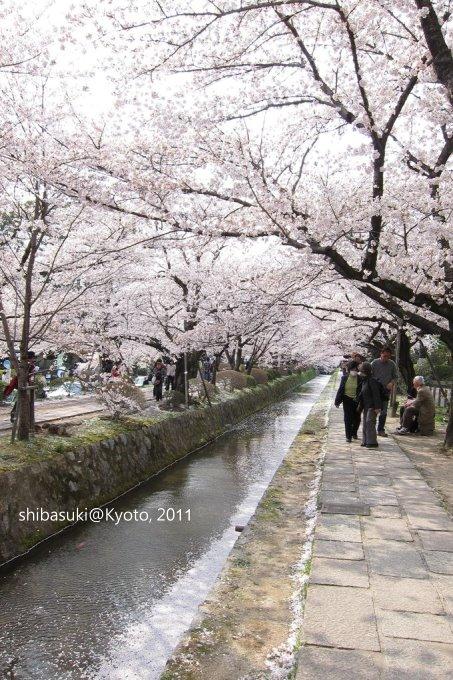 20110411_Kyoto-270_哲學之道_1.JPG