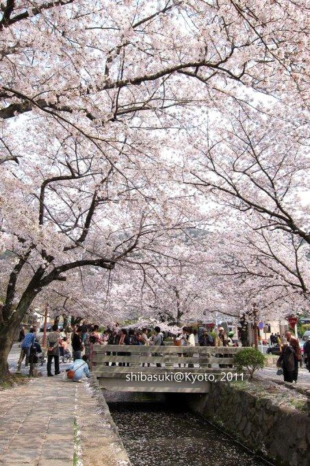 20110411_Kyoto-271_哲學之道_1.JPG