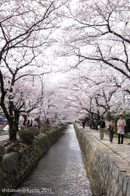 20110411_Kyoto-274_哲學之道_1.JPG