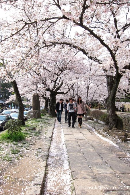 20110411_Kyoto-278_哲學之道_1.JPG
