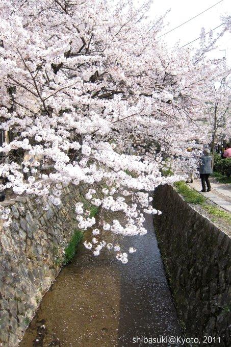 20110411_Kyoto-279_哲學之道_1.JPG