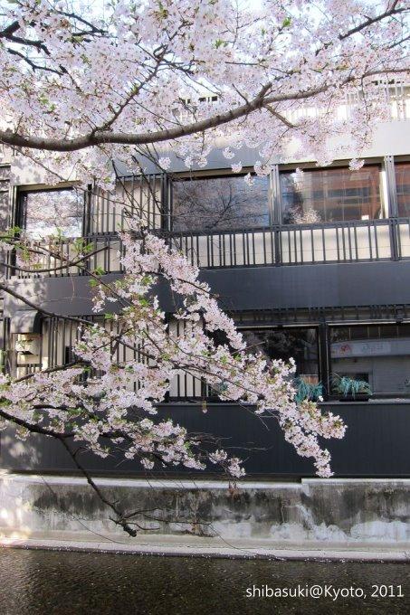 20110412_Kyoto-20_高瀨川_1.JPG