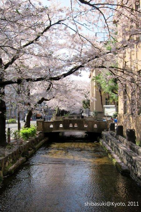 20110412_Kyoto-49_高瀨川_1.JPG