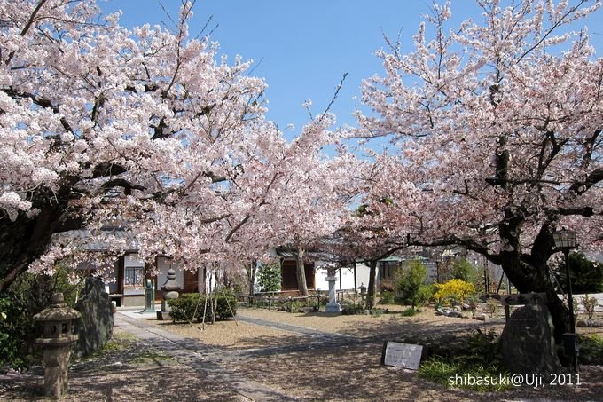 20110412_Kyoto-83_宇治 橋寺放生院_1.JPG