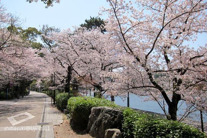 20110412_Kyoto-97_宇治_1.JPG