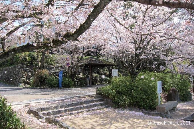 20110412_Kyoto-101_宇治_1.JPG